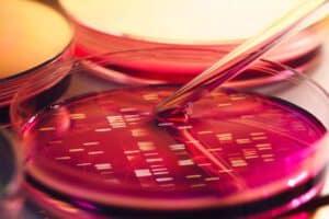 DNA_petri_dish
