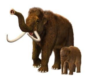 woolly_mammoths