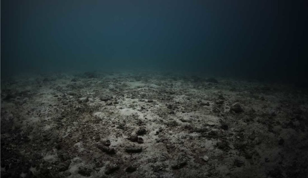 As Acidification Increases Ocean Biodiversity May Decline